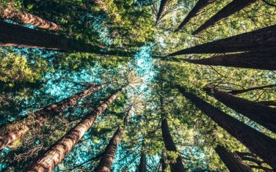Why Being In Nature Will Help You Live Longer