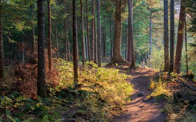 How to Blaze Your Path to Optimal Health and Recognize Impactful Obstacles Along the Way